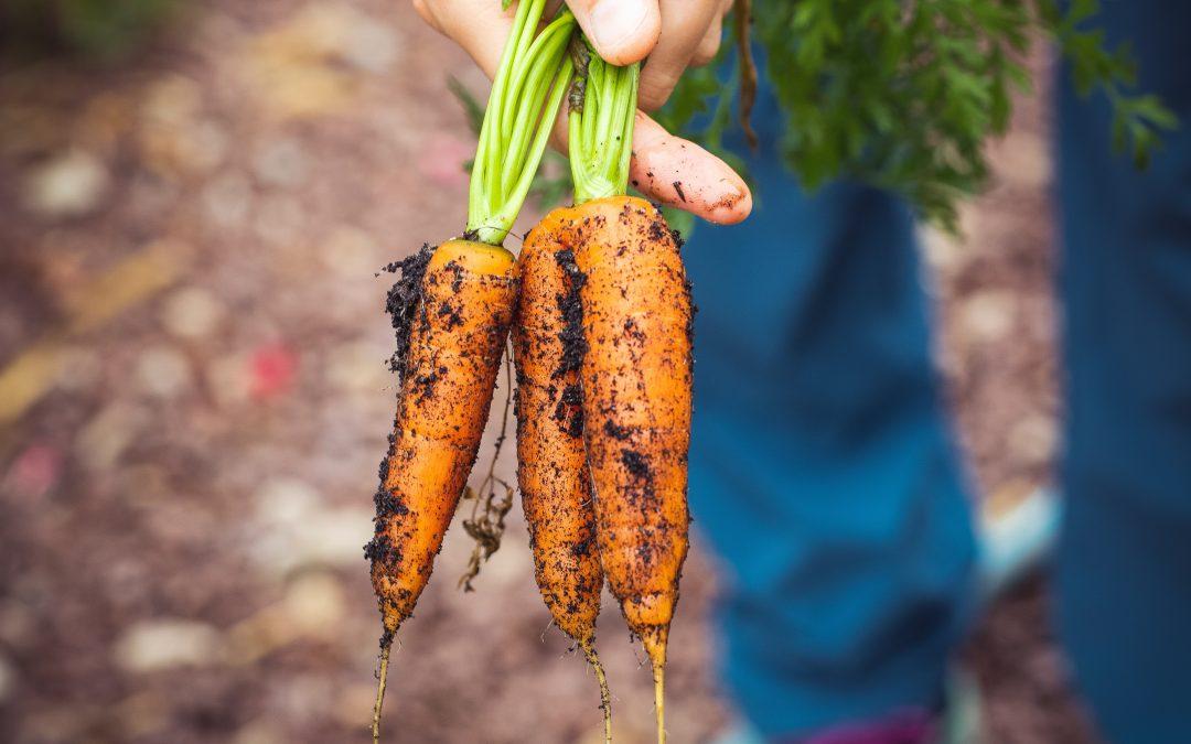 Recette du mois : Pesto fanes de carottes